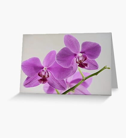 phalaenopsis pink flowers close to Greeting Card