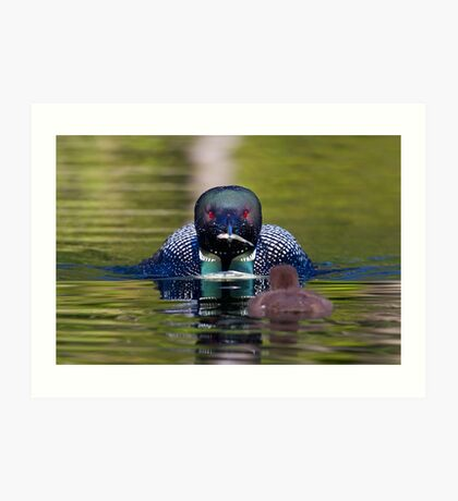 Take-out finally arrives - Common Loon - Buck Lake, Ontario Art Print
