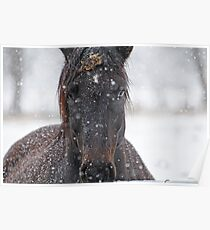 Horse in Snowstorm Poster