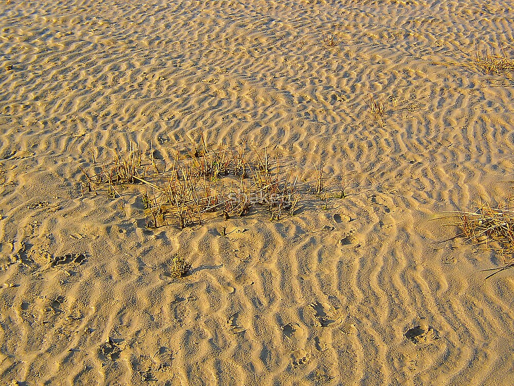 Patterns in the wet sand by shakey