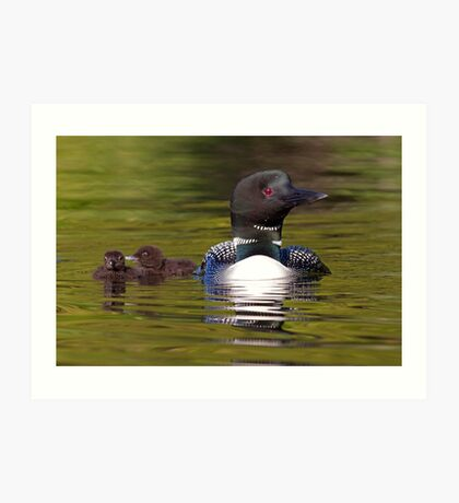 Looniage - Common Loon Art Print