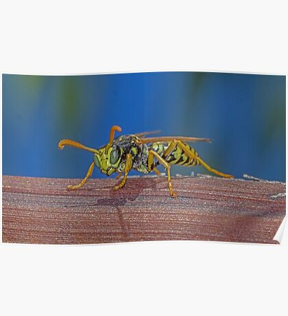 Wasp with focus Poster