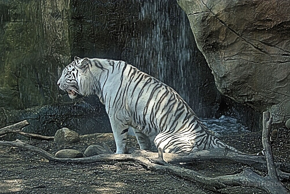 White Tiger by Marya Humble