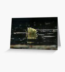 Lily Dip Greeting Card