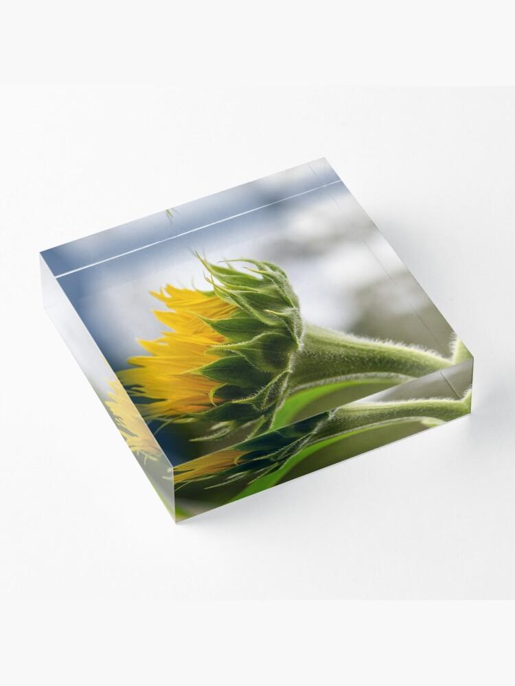 Alternate view of Seeking The Sun Acrylic Block