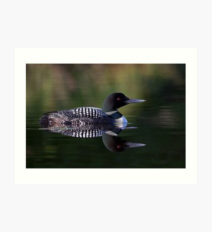 Reflective Loon - Common Loon Art Print