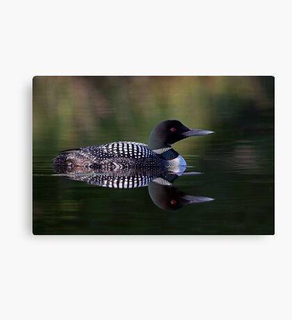 Reflective Loon - Common Loon Canvas Print