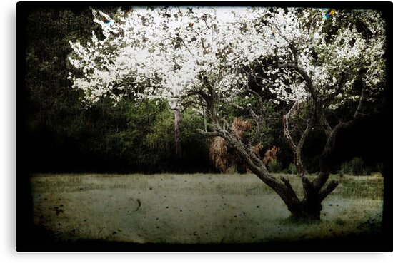 Blossoms by Sarah Moore