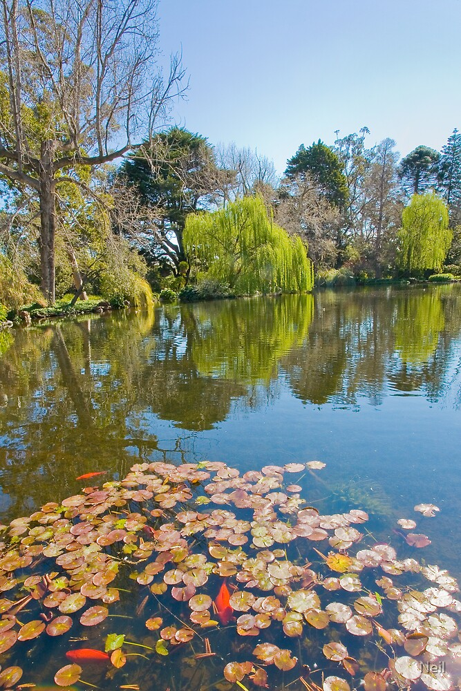 Ripponlea Lake with Goldfish by Neil