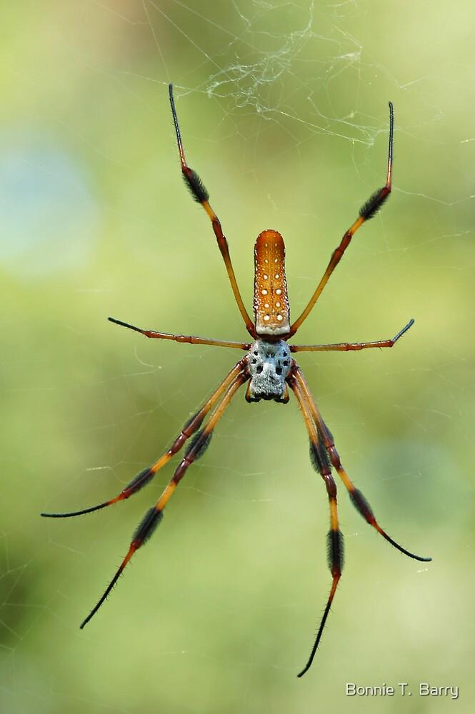 Golden Silk Spider by Bonnie T.  Barry