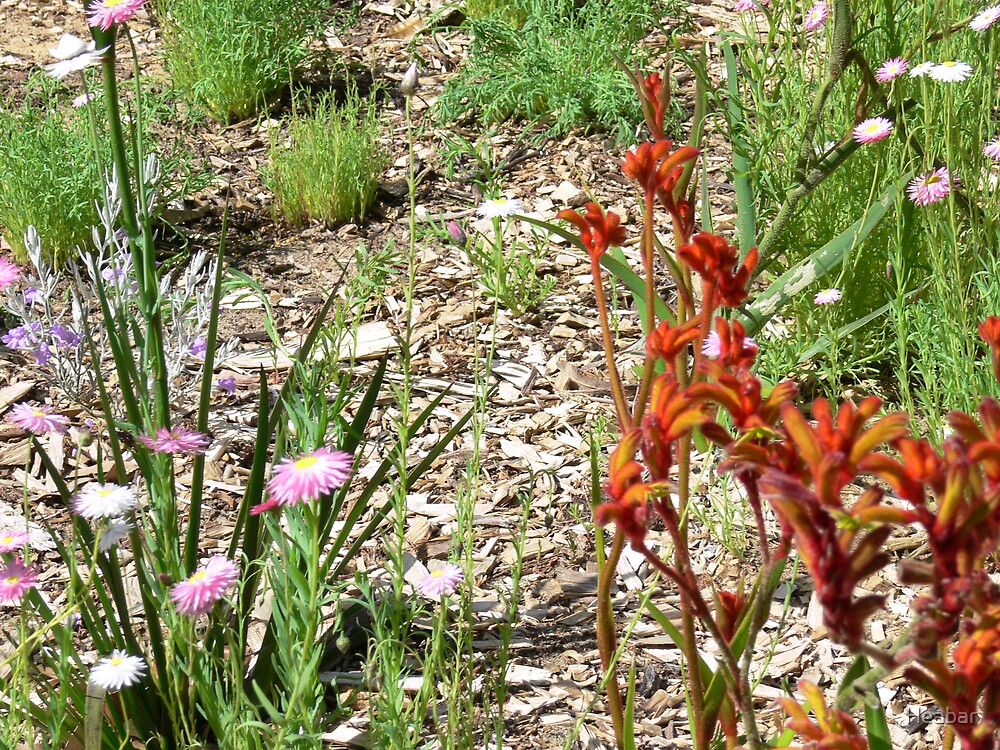 Native flowers of Western Australia by Heabar