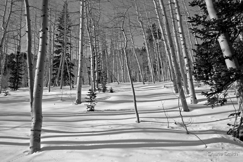 Snow Aspens by Shane Smith