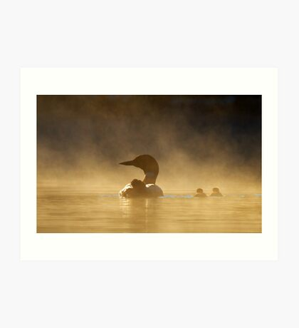 Loons in the mist - Common Loon Art Print