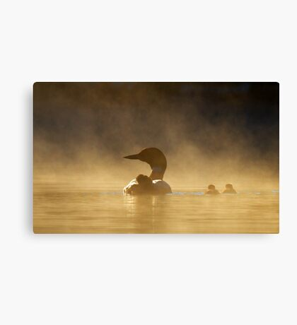 Loons in the mist - Common Loon Canvas Print