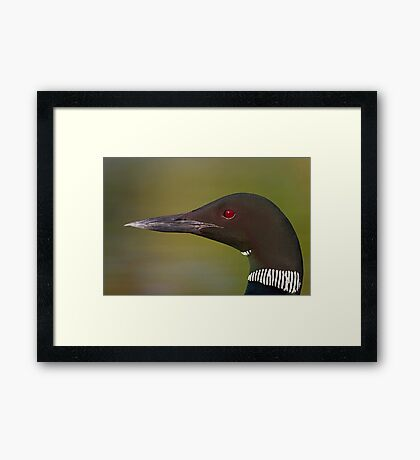 Common Loon profile Framed Print