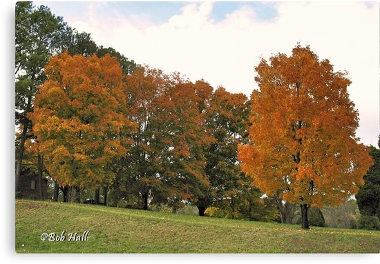 """""""Fall 2009 - West Knoxville, Tennessee - 4""""... prints and products by Bob Hall©"""