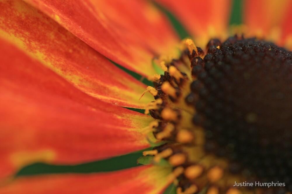 Orange & Brown by Justine Humphries
