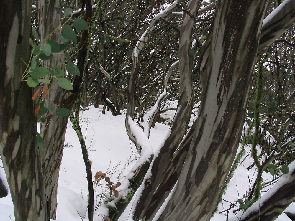 snow gums by southwood1990
