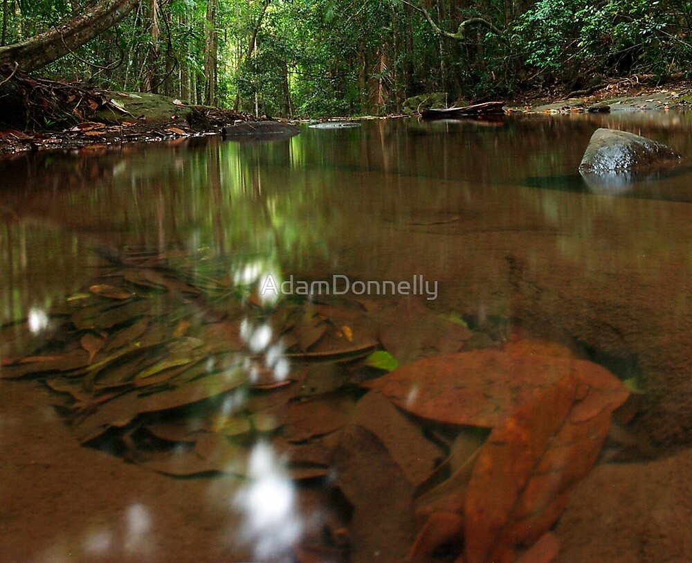 Buderim Forest by AdamDonnelly