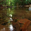 Buderim Forest by AdamDonnelly