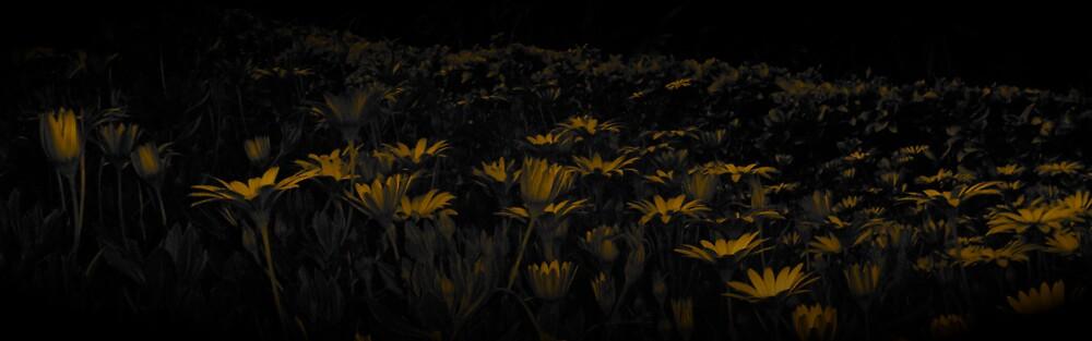 Solar Blooms by diongillard