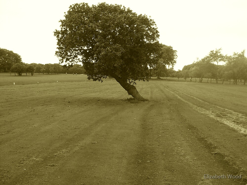 Standing, Just by Elizabeth Wood