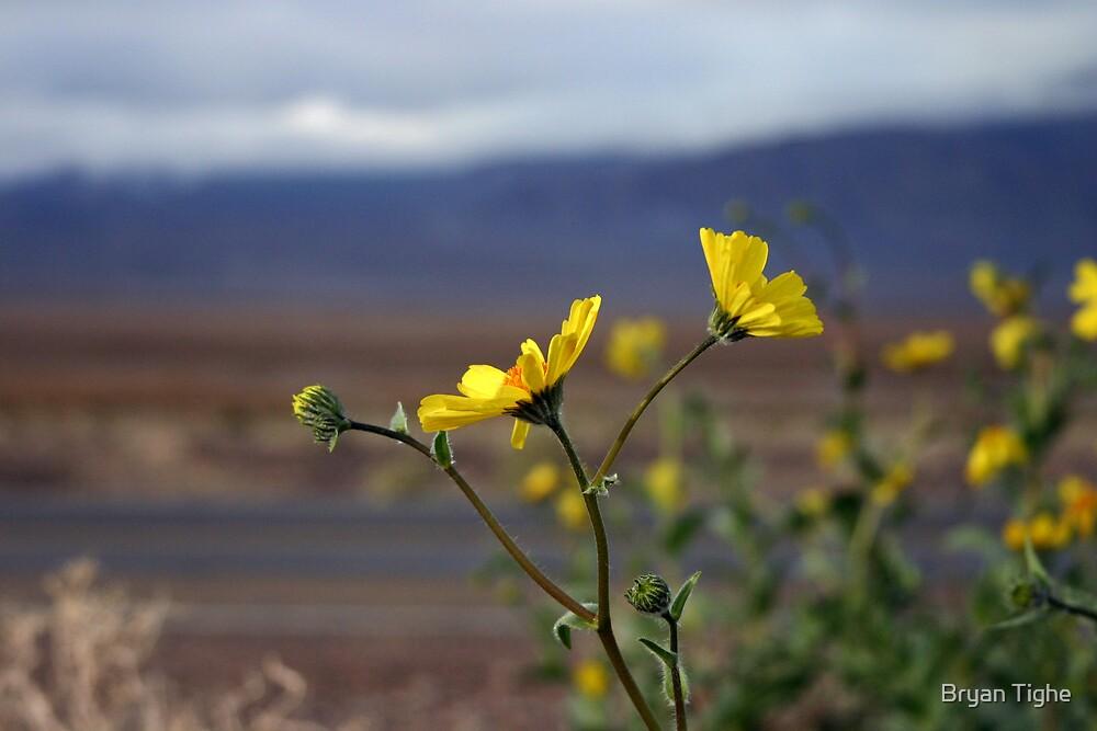 Death Valley by Bryan Tighe