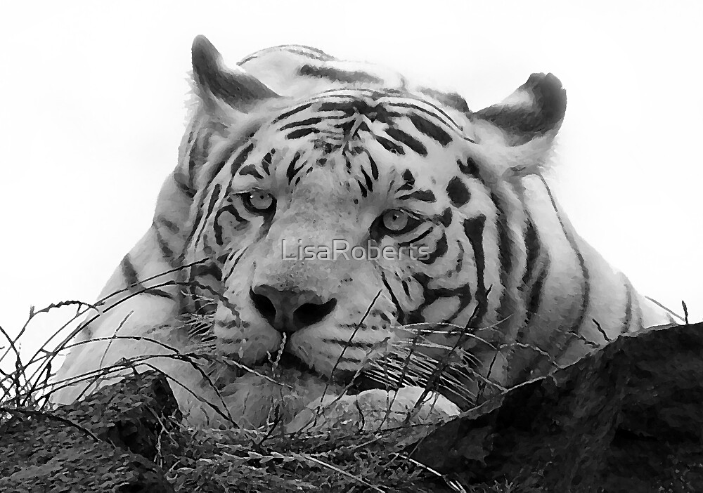 White tiger 2 by LisaRoberts