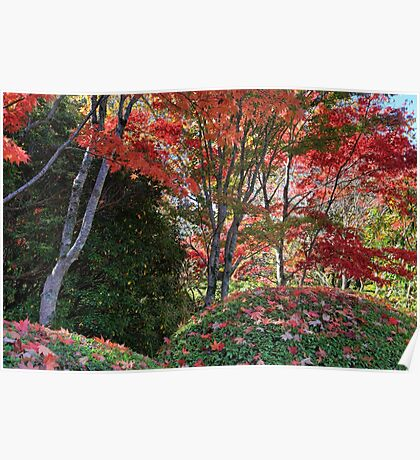 Under a canopy of red in Autumn Season Poster
