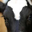 Calf by Imprint