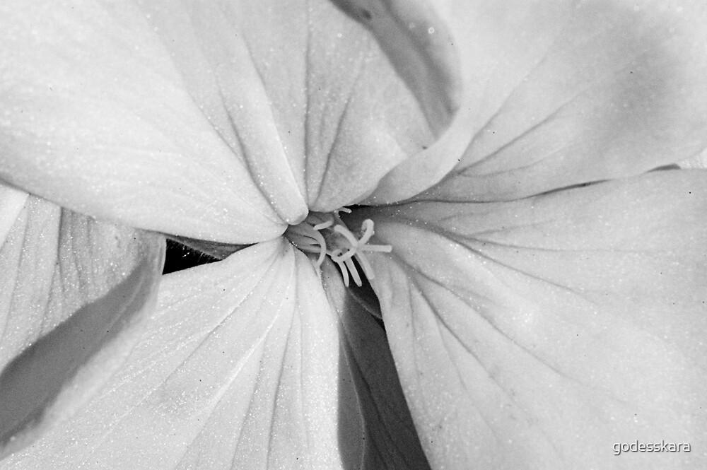 inocent white by godesskara