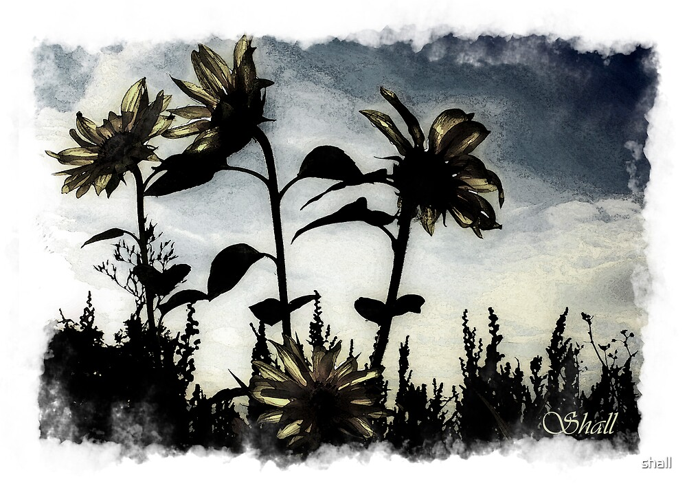 Sunflowers 4 by shall
