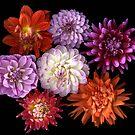 Bouquet of Dahlias by Jeffrey  Sinnock