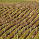 Vineyard Pattern by Barbara  Brown