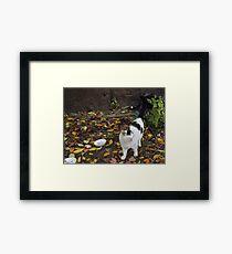 Cat Portrait, Brunswick Community Garden, Jersey City Framed Print