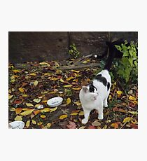 Cat Portrait, Brunswick Community Garden, Jersey City Photographic Print