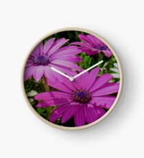 Purple And Pink Tropical Daisy Flower Clock