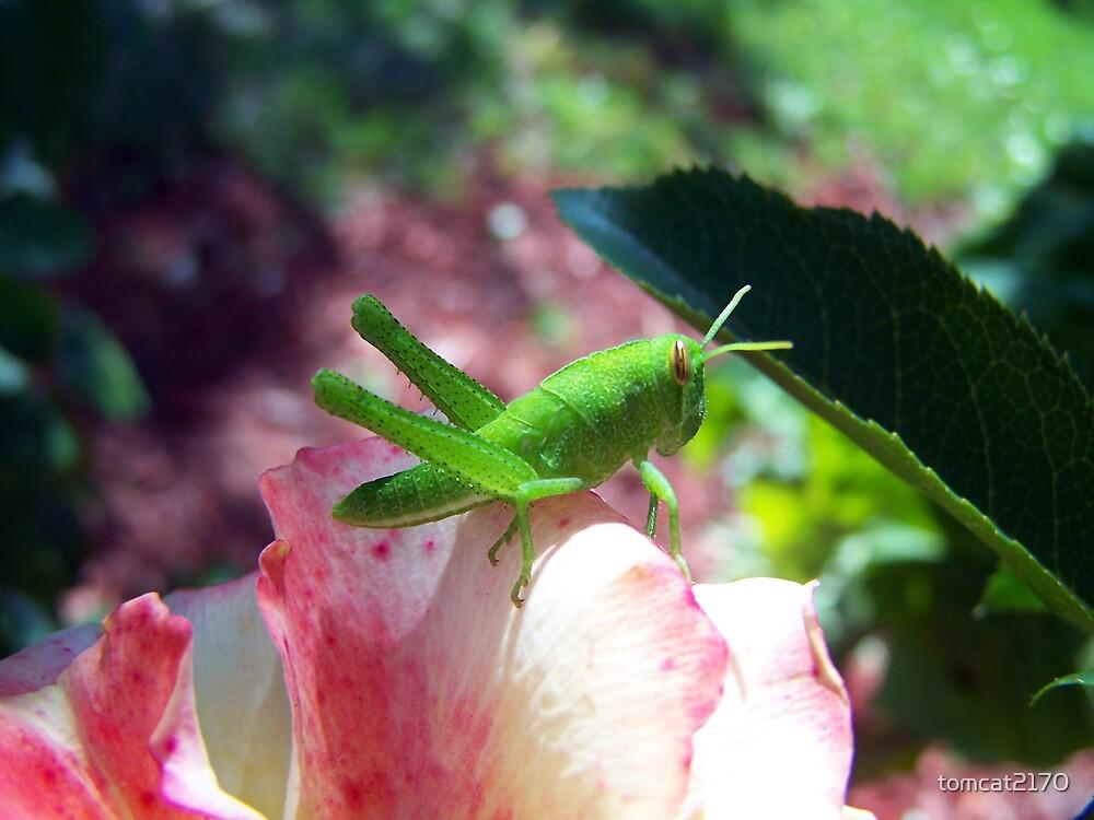 grasshopper by tomcat2170