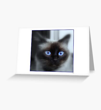 Blu eyes 2 Greeting Card