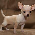 Super Puppy by Bjana Hoey