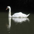 swan on the river Thames by Stacey Kellett