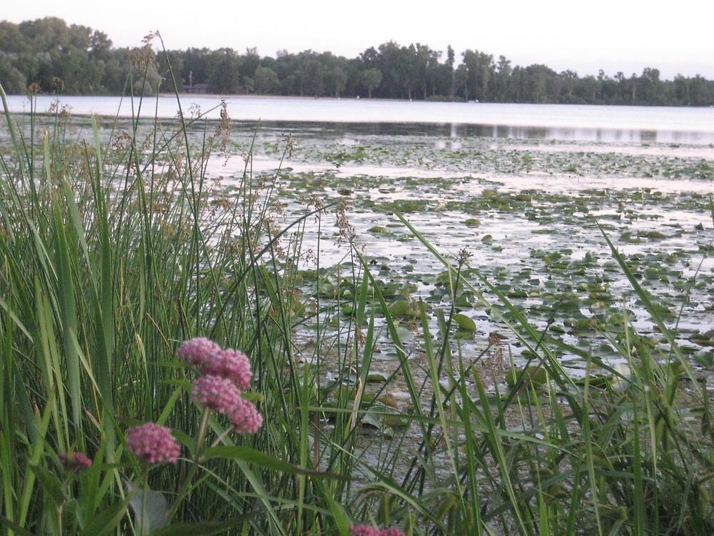 lake by Elzbieta