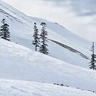 Shiny Snow by Svetlana Sewell