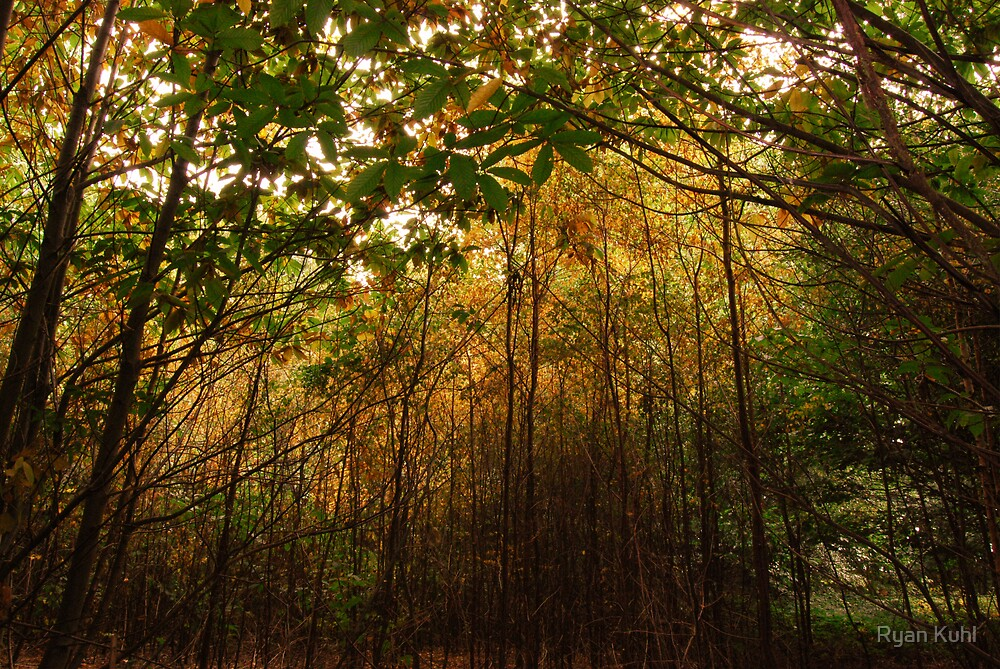 Red Foliage by Ryan Kuhl