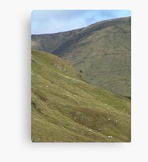 Sheep High Canvas Print