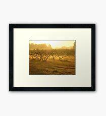 orchard 2 Framed Print
