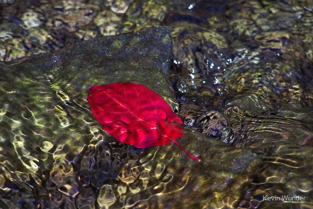 Leaf by Kevin Wunder