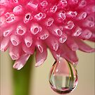 Morning Rain Drop by Barb Leopold