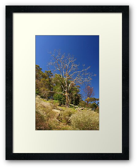 Tree On The Hill  by EOS20