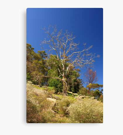 Tree On The Hill  Canvas Print